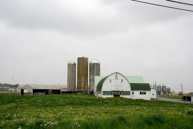 Boltz_farm